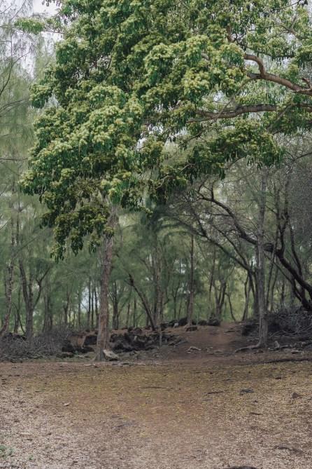 Randonnée Trou d'Argent - Rodrigues-2