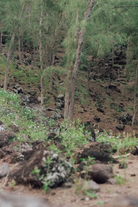 Randonnée Trou d'Argent - Rodrigues