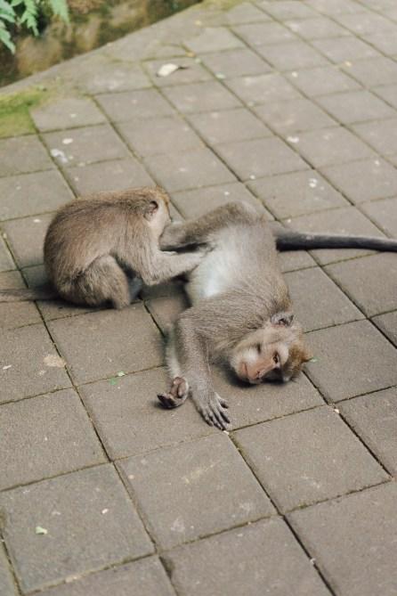 Forêt des singes - Ubud - Bali-15