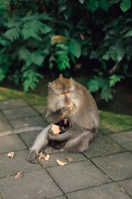 Forêt des singes - Ubud - Bali-16