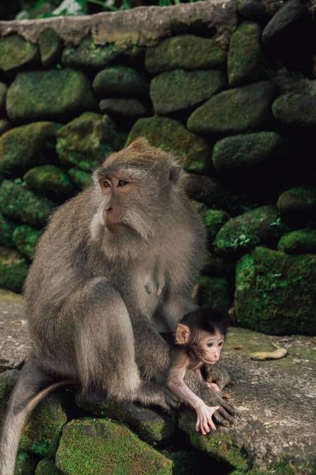 Forêt des singes - Ubud - Bali-2