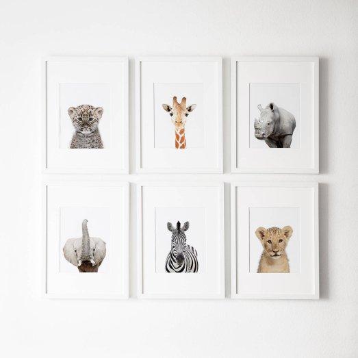 Photographies de bébés animaux - L'amour fou print shop