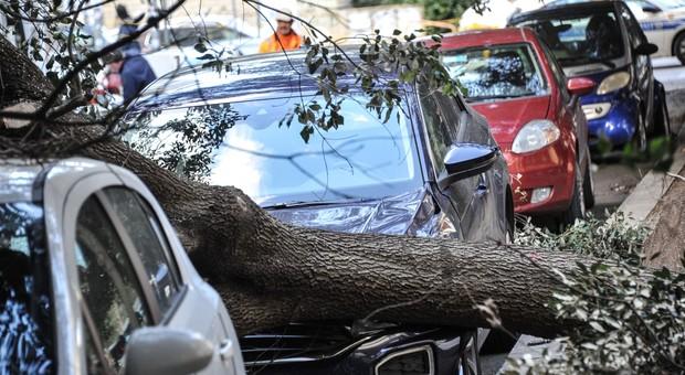 Maltempo, 65enne muore travolto da un albero nel salernitano