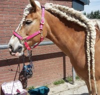 Horse Owners Braid Horses Manes For This Reason