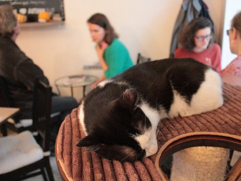 Cat-Cafe-Prague-Tres-Bohemes