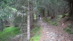 Single track nel bosco.