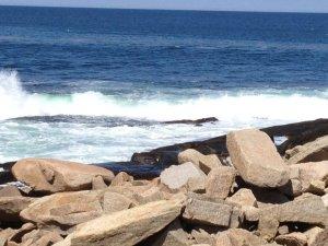 halibut-ocean | Life coaching & psychotherapy via phone and skype | life coach near me