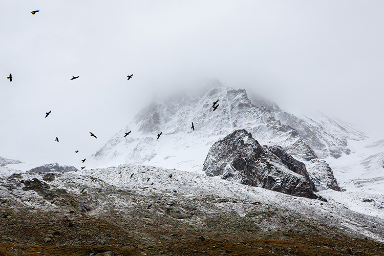 black birds flying over snowy mountains