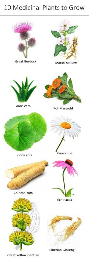 10 Medicinal Herbs to Grow