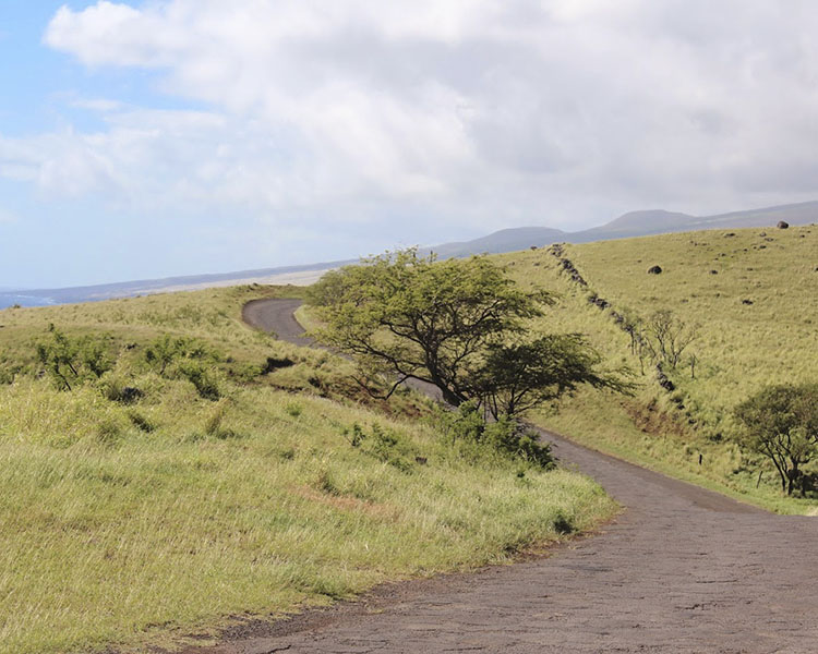 empty road and wind blown tree looking out to the ocean waves in Maui Hawaii