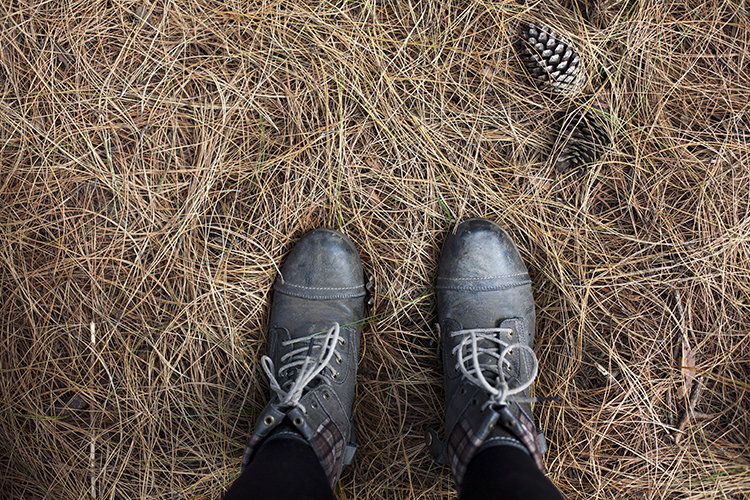 old leather boots standing on pine needles and pine cones