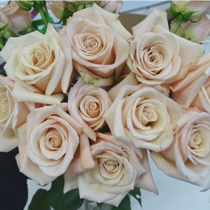 Rose Bridal Nude