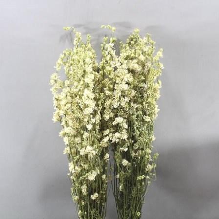 DELPHINIUM AJA LARKSPUR WHITE (DRIED)
