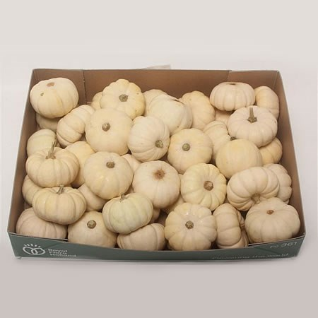 GOURDS - PEPO BABY BOO