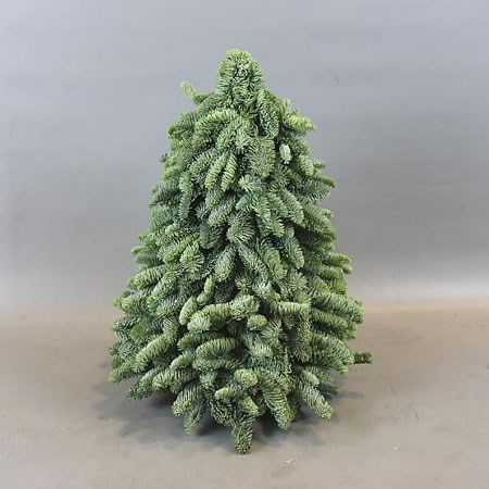 SPRUCE TREE SHAPE