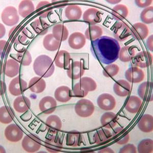 HC1-40 Human Blood Wright Stain Prepared Microscope Slide