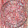 Botrychium Contractile Root LS Prepared Microscope Slide
