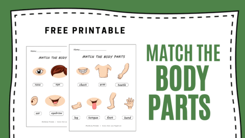 Learn the Body Parts Worksheets