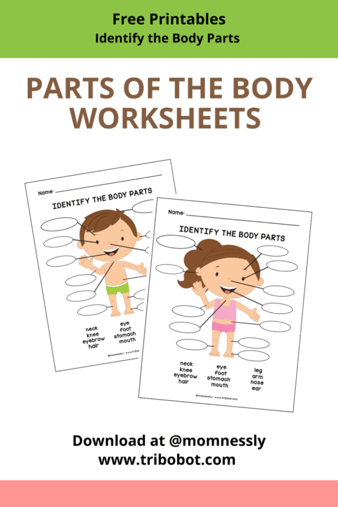 Free Printable: Parts of the Body Worksheet
