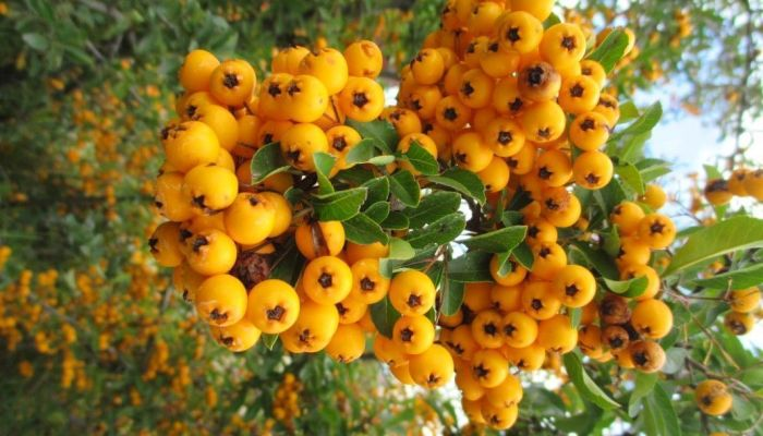 Recoger semillas para crear tus bonsáis desde cero