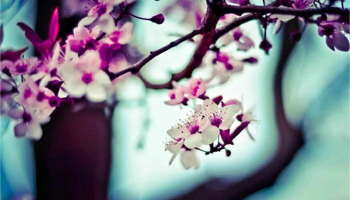 Cómo crear y cuidar un bonsái