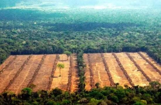 lucha contra la deforestación