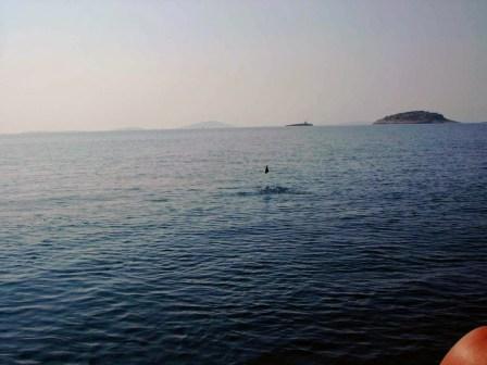 otoki-čolni-morje (4)