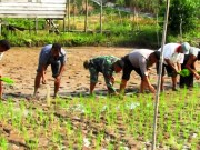 Babinsa dan Babinkamtibmas bersama petani lakukan penanaman padi di sawah