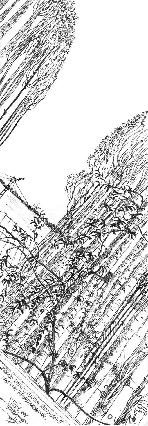 Plein air drawing of poplar trees in Van