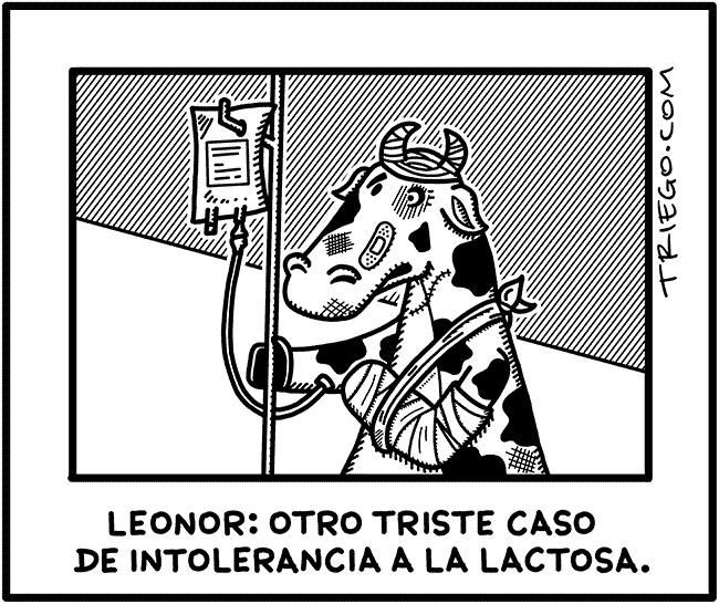 intolerancia-a-la-lactosa