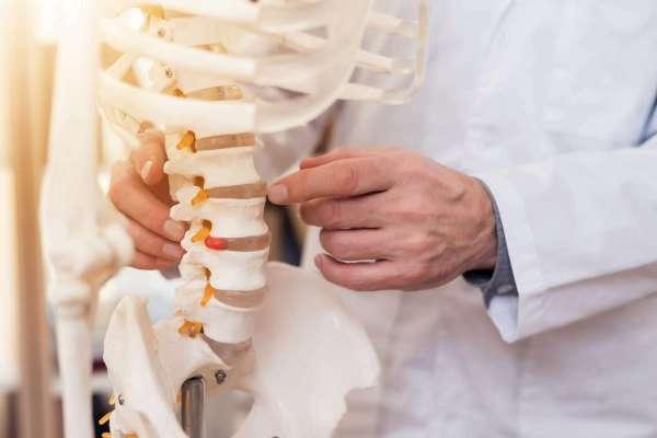 Trifocus fitness academy - vertebral bones
