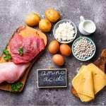 Trifocus fitness academy - amino acids
