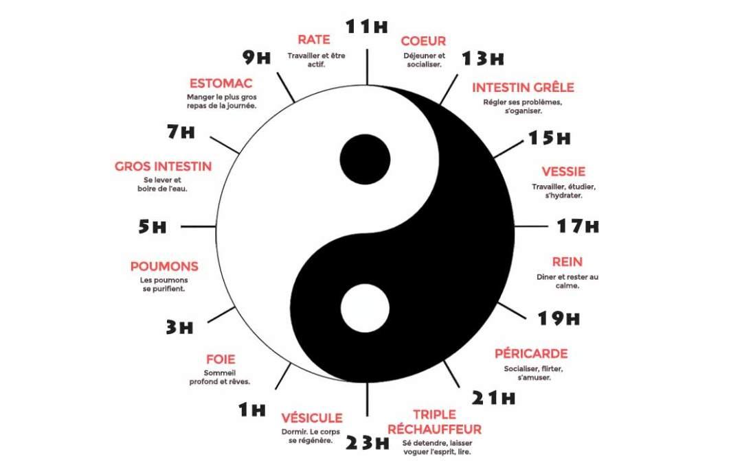 La Minute Santé n°4 : L'horloge biologique chinoise au service des sportifs