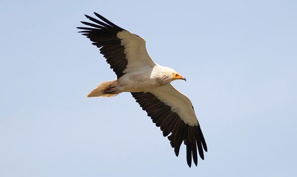 μόνο τα μεγαλύτερα πουλιά τοπικές MILFs πορνό