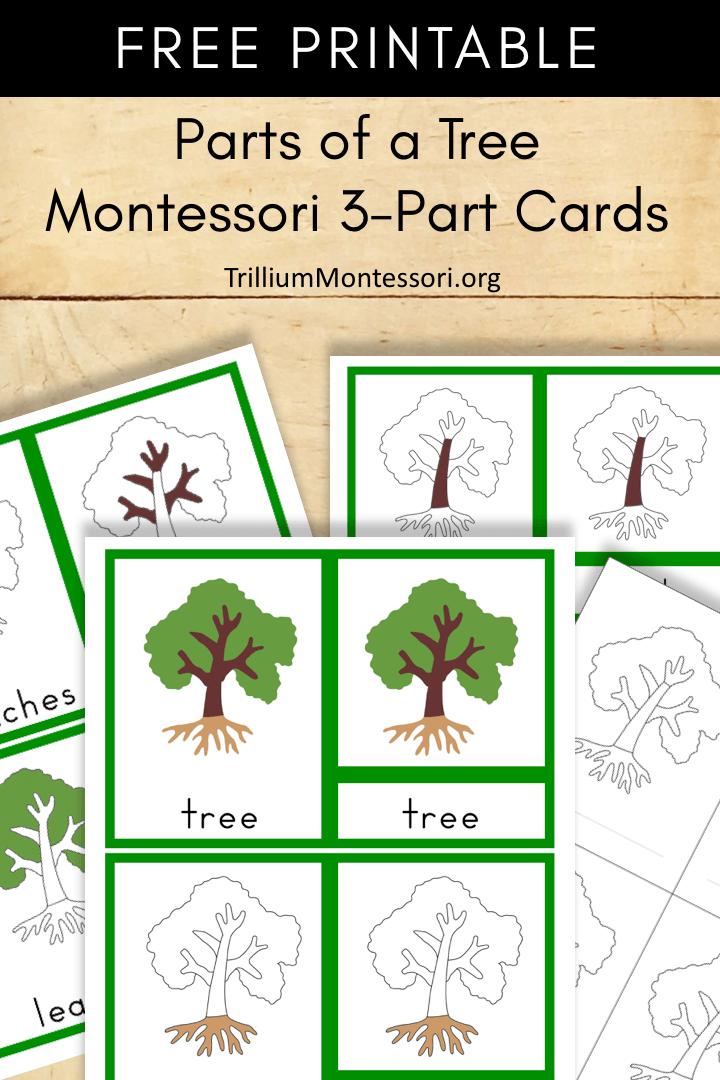 Free Montessori Printable Parts of a Tree  Trillium Montessori