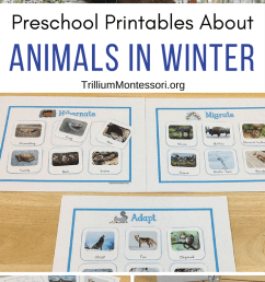 Animals in Winter Unit - Trillium Montessori [ 1400 x 735 Pixel ]