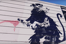 "Legendary Street Artist Banky's Infamous Haight Street Rat From Netflix Documentary ""Saving Banksy"" Crosses The Border Into Canada on November 14th-16th"