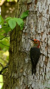 God, delight, woodpecker