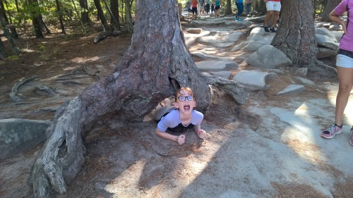 Next stop: going through a tree!