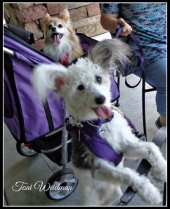 Trinity Pet Sitters Pet Care