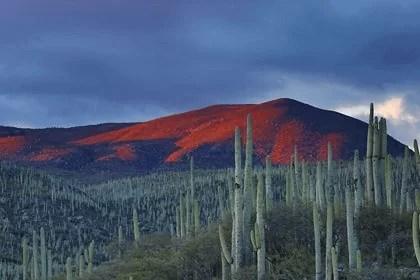 Partir à la découverte du Mexique