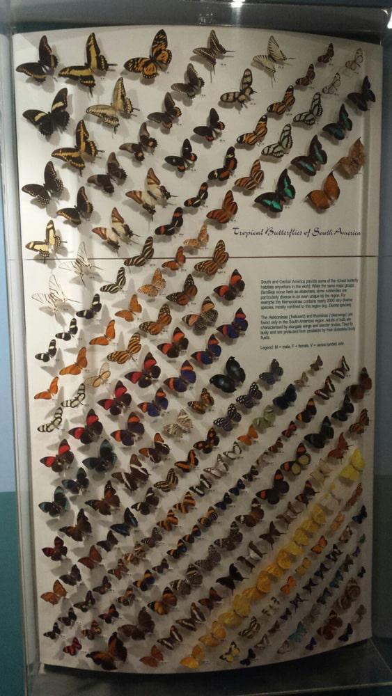 Magnifique collection de papillons