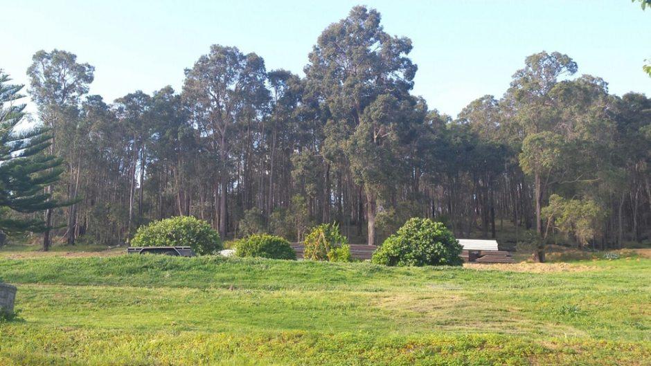 La forêt au dessus de la maison