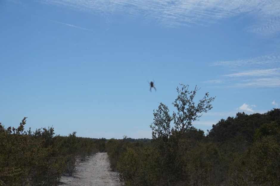yalgorup-national-park-walk-lost-spider