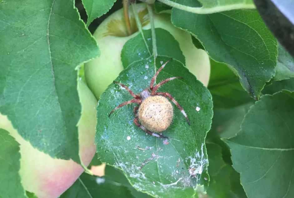 pruning-spider-2