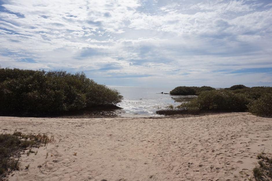 Mangrove Bay