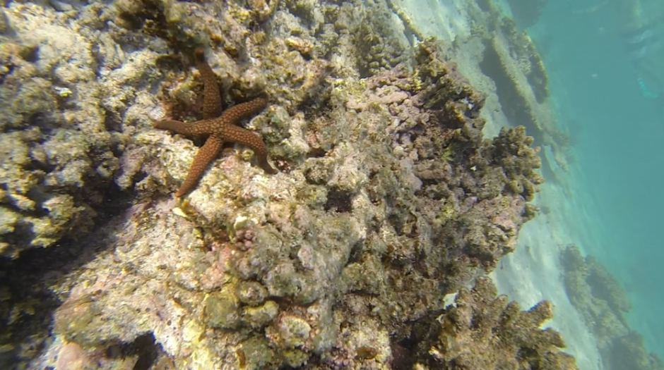 oyster-stacks-snorkelling-3