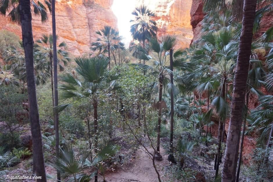 mini-palms-gorge-palms