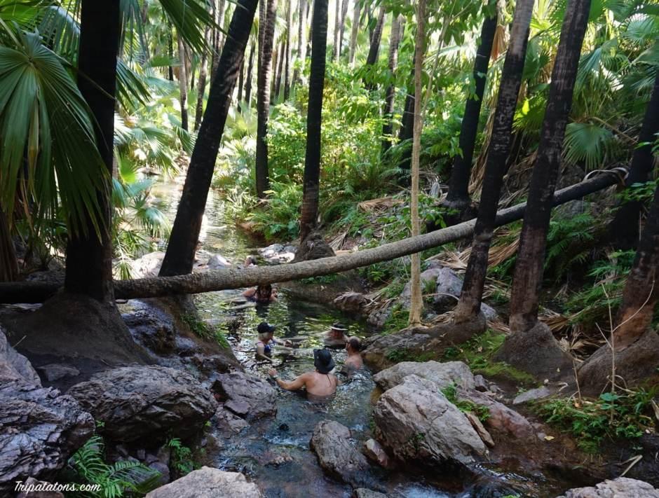 zebedee-springs-river