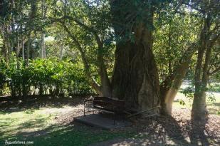 botanic-gardens-5